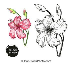 tropical Flowers in Sketch