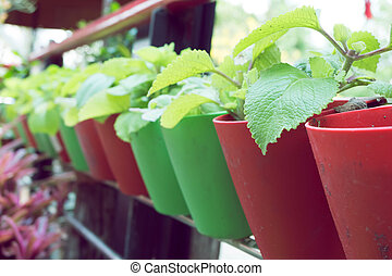 small organic plants growing in potted plant - small organic...