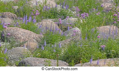 Aspect purple. Seaside meadows plot with boulders - plot of...