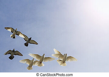 flock of pigeons on cloudy sky with sunny hotspot - flock of...