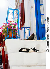 Cat outdoors in front of colorful blue door in Greece