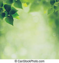 Beauty spring and summer backgrounds with birch foliage
