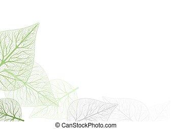 Leaves Backgound - Leaves Background - Leaf Venation...