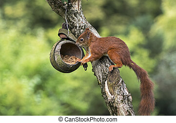 Squirrel on a bird feeder