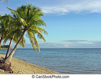 Fijian Beach and Palm Trees 1 - Fijian beach and coconut...