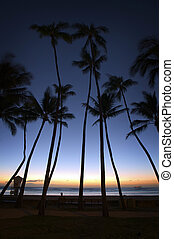 Honolulu Palm Sunset - Palm trees line the beach as the sun...