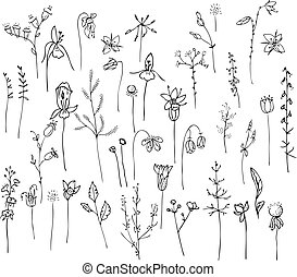 Collection with stylized forest flowers and herbs isolated...