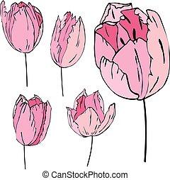 Stylized pink tulips isolated on white background
