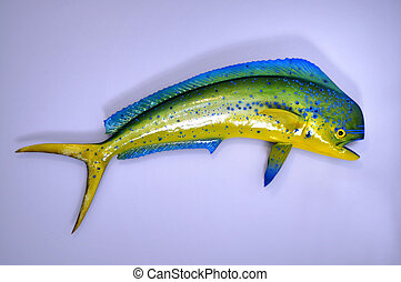 Mahi Mahi - Mahi-Mahi mounted on wall