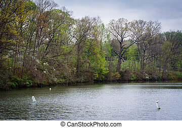 Spring color along Lake Roland, at Lake Roland Park, in...