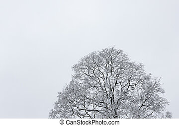 Big tree cloudy sky black and white background at winter