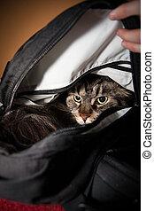 enojado, gato, en, backbag,
