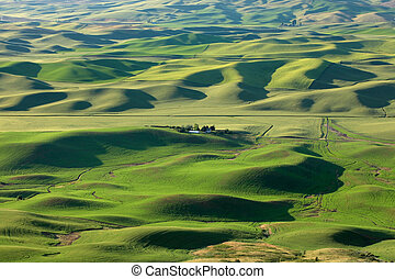 Palouse - View of wheat fields from Steptoe butte in...