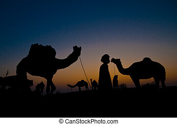 Camels at sunset - Silhouetted camels in the desert at the...