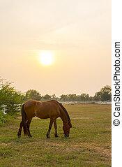 caballo, en, el, granja, en, ocaso,