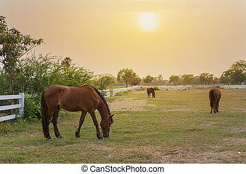 granja, caballo, ocaso