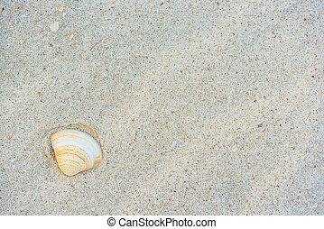 Shell and White Sand texture