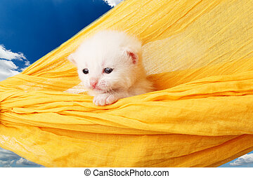Cute white kitten in hammock at blue sky - White kitten in a...