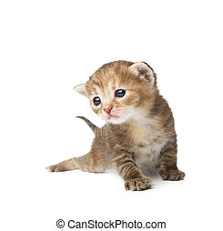 Cute grey striped kitten isolated - Cute grey striped...