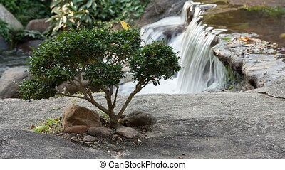 Japanese Garden and river flows - Japanese Garden bansai...