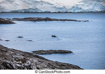 naturaleza, y, paisajes, de, el, Costa, antártida,...