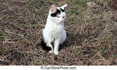 Cute Black and White Cat, HD