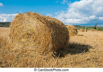 Harvested field with straw bales hay-roll in summer