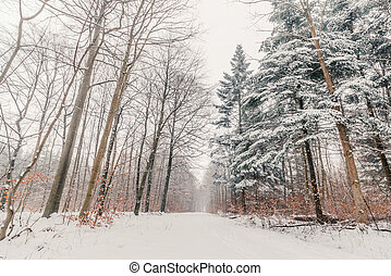 Snow on the trees in a forest
