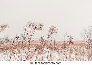Snow on tall grass