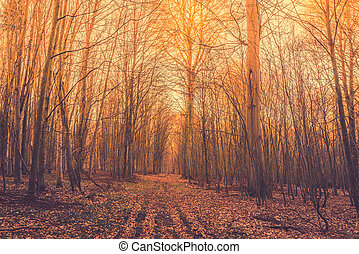 Autumn sunrise in the forest