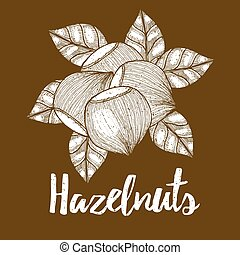 Hazelnut with leaves background in vintage style, vector