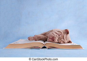 Puppy sleeping on book - Puppy sleeping sweetly on an open...