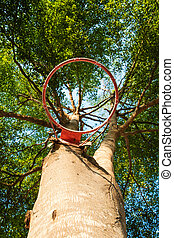 Tree with basketball hoop, selective focus