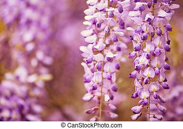 purple flowers in spring - beautiful purple spring flowers...