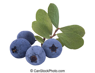Bunch of fresh blueberries