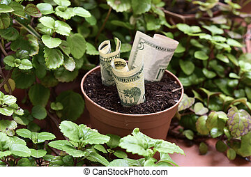 money plant - some dollar bills in a brown plant pot next to...