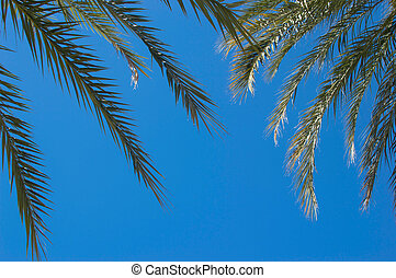Palmtree branches with blue sky in the background