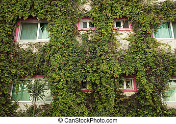Green architecture building facade with ivy plants