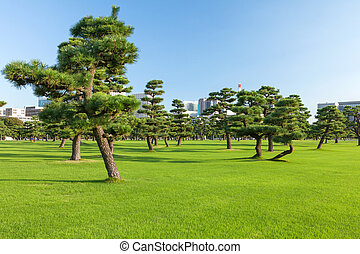 Pine trees park in Tokio - Pine trees park in front of...