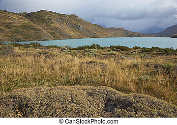 Torres del Paine National Park - Low lying plants and...