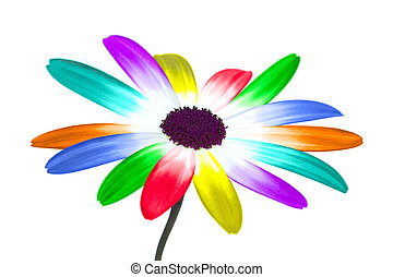 Rainbow daisy - Abstract image of a daisy with it\'s petals...