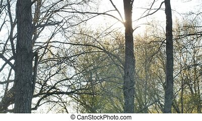 Forest tree silhouette sun glare sunlight nature landscape -...