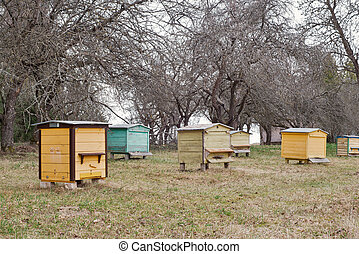 wooden bee hives in a garden - Colorful wooden bee hives in...