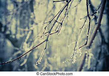 frozen twigs in the forest
