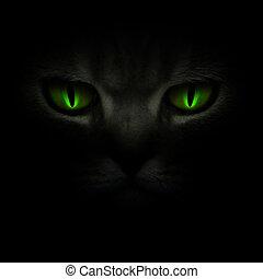 Green cat\'s eyes glowing in the dark