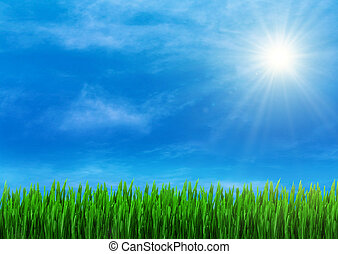 Spring grass and blue sky
