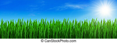 Spring grass and blue sky panorama