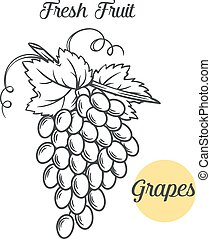 grapes in the old ink style - Hand draw monochrome grapes ....