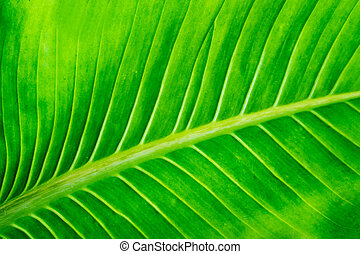 green leaf texture background.