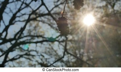 elm silhouette bud sun tree sun glare forest sunlight landscape nature